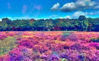 Colorful field near the woods wallpaper 1920x1080 jpg