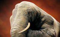 Elephant painted on hand wallpaper 2560x1600 jpg