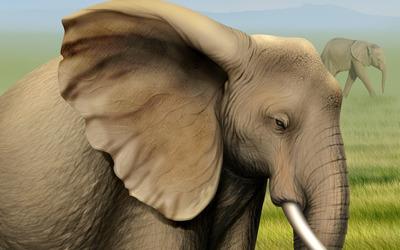 Elephants [7] wallpaper