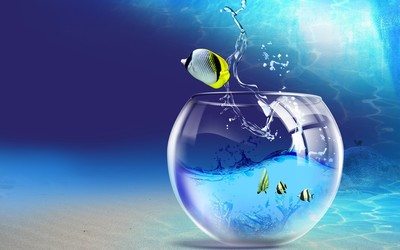 Fish escaping from the aquarium wallpaper