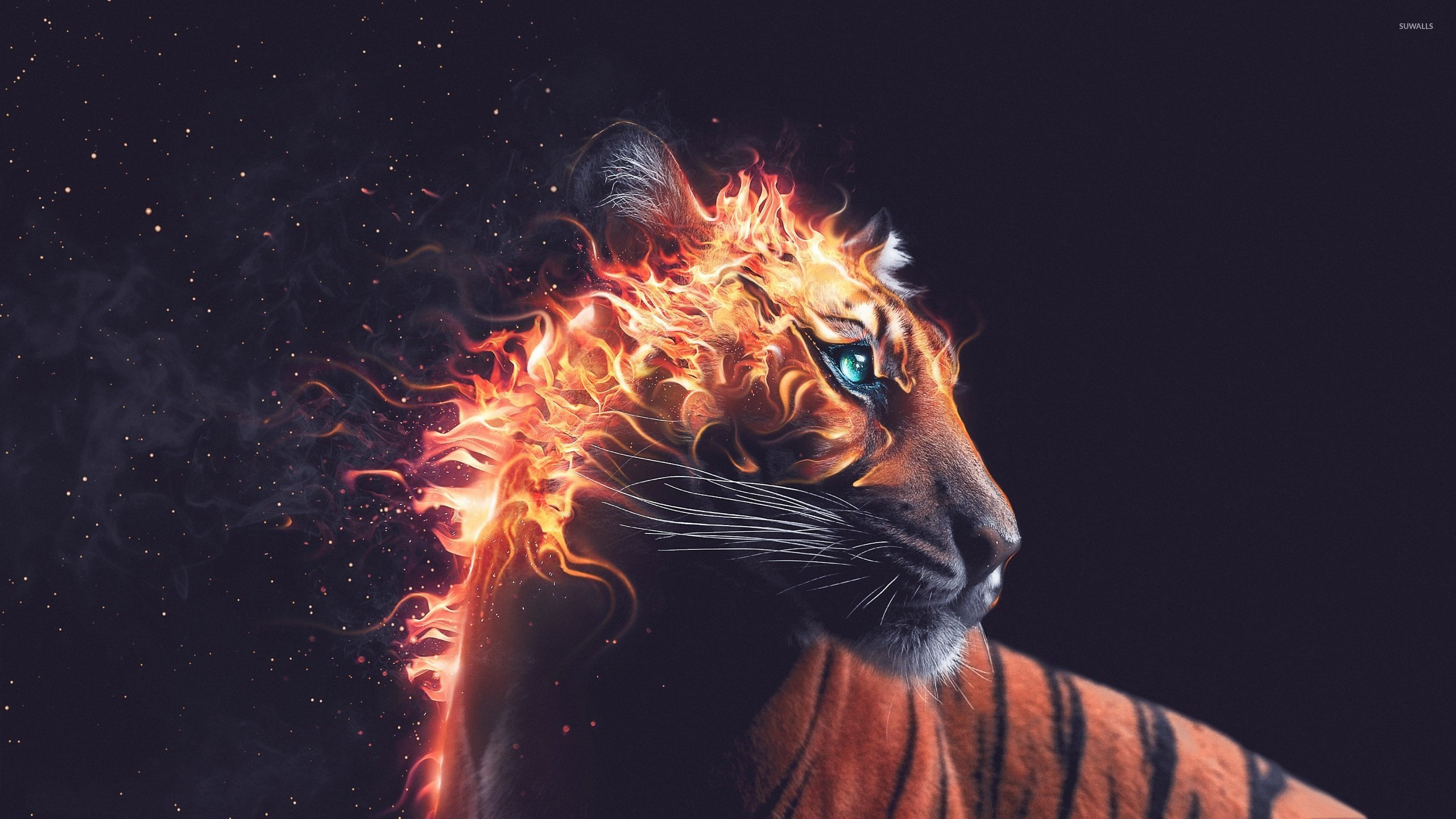 Flaming Tiger Wallpaper Artistic Wallpapers 38787
