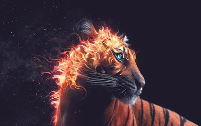 Flaming tiger wallpaper