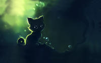 Googly eyed cat wallpaper 1920x1200 jpg