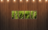 Grass under the spotlight wallpaper 2560x1600 jpg