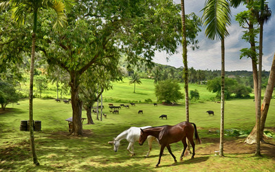 Horse farm wallpaper