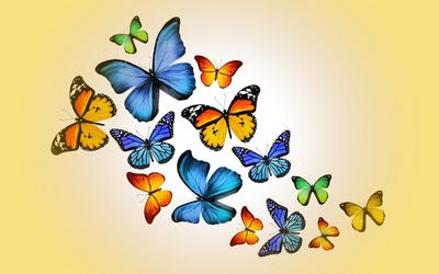 Orange and blue butterflies wallpaper