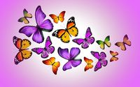 Orange and purple butterflies wallpaper 2560x1600 jpg