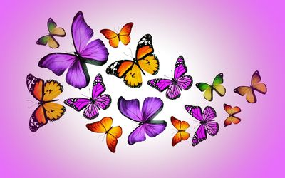 Orange and purple butterflies wallpaper