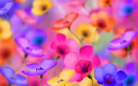 Pansies [2] wallpaper 1920x1200 jpg