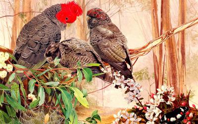 Parrots [5] Wallpaper