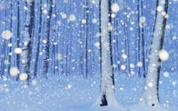 Snowy trees [2] wallpaper 1920x1080 jpg
