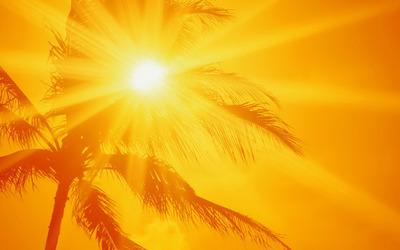 Sunlit palm tree wallpaper