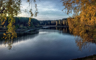 Thick forest by the river wallpaper