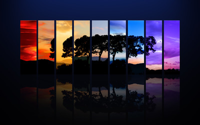 Tree in different seasons wallpaper