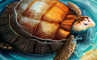 Turtle [5] wallpaper 1920x1200 jpg