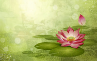 Water Lily wallpaper 1920x1200 jpg