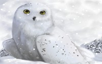 White owl wallpaper 1920x1200 jpg