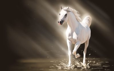 White stallion wallpaper
