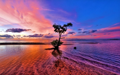 Beautiful sunset sky behind the lonesome tree on the beach wallpaper