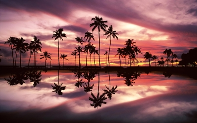 Beautiful sunset sky behind the palm trees by the ocean Wallpaper