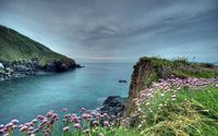 Cliffside flowers wallpaper 1920x1200 jpg