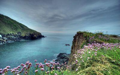 Cliffside flowers wallpaper
