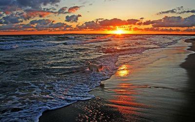 Dog at sunset at the ocean wallpaper