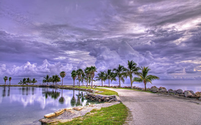 Fluffy clouds over the palm trees wallpaper