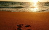Foot prints on sandy beach wallpaper 1920x1200 jpg
