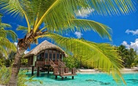 Hut in the water by the palm trees wallpaper 2880x1800 jpg