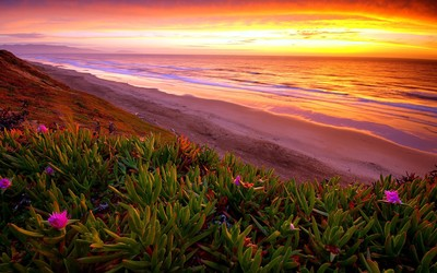 Ice plants on the beach wallpaper