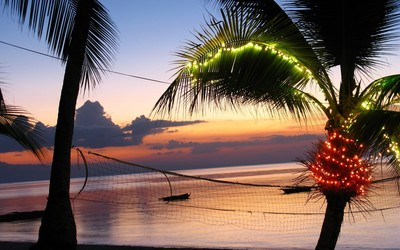 Light in a palm tree at sunset wallpaper