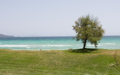 Lone tree above the Playa de Muro beach wallpaper