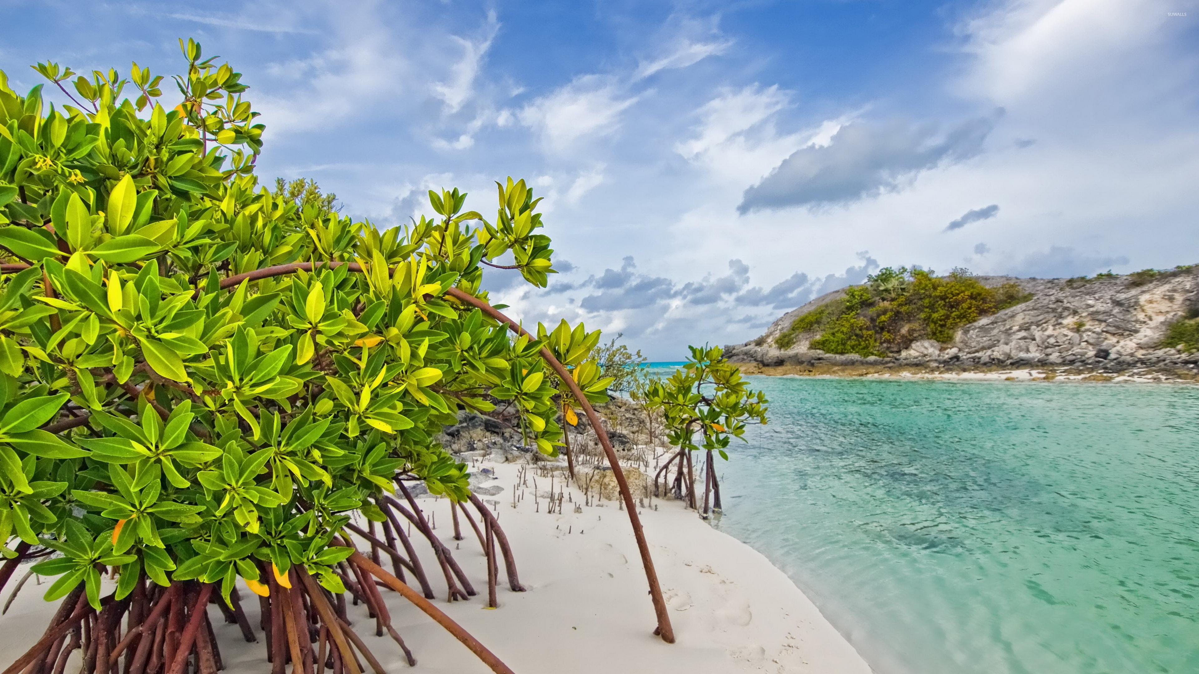Sandy Beach Wallpaper: Mangroves On A Sandy Beach Wallpaper
