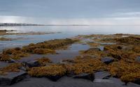 Mossy rocks on the sandy beach wallpaper 2880x1800 jpg