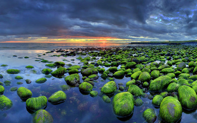 Mossy rocks on the sunset beach Wallpaper