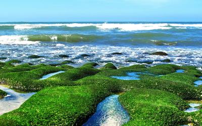 Mossy shore [2] wallpaper