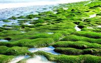 Mossy shore wallpaper 1920x1200 jpg