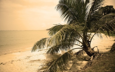 Palm tree on a sandy beach [2] wallpaper
