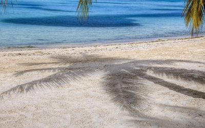 Palm tree shadow on the sandy beach wallpaper