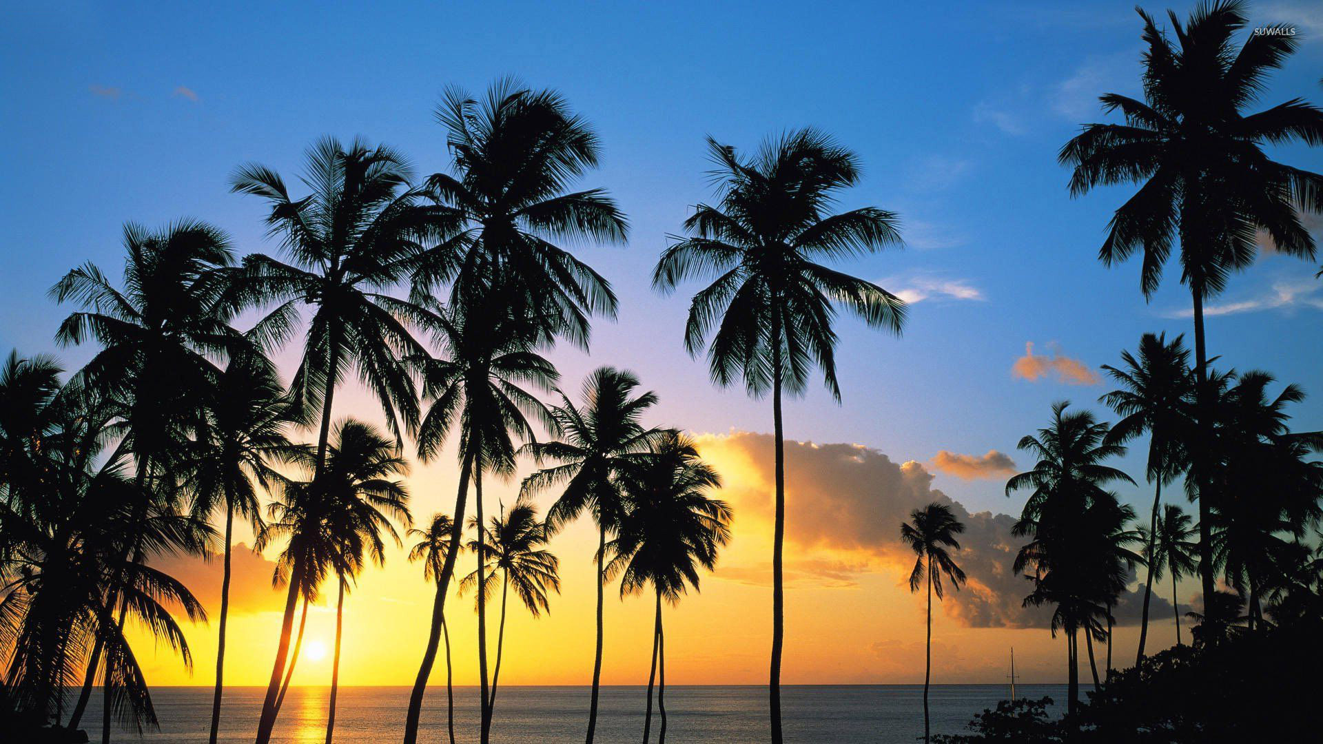 palm tree silhouettes in the sunset wallpaper beach