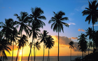 Palm tree silhouettes in the sunset wallpaper 1920x1080 jpg