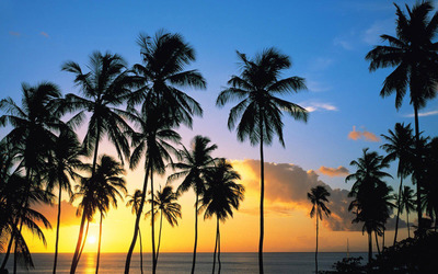 Palm tree silhouettes in the sunset wallpaper