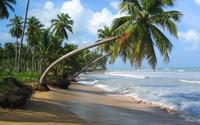Palm trees leaning towards the ocean wallpaper 1920x1200 jpg