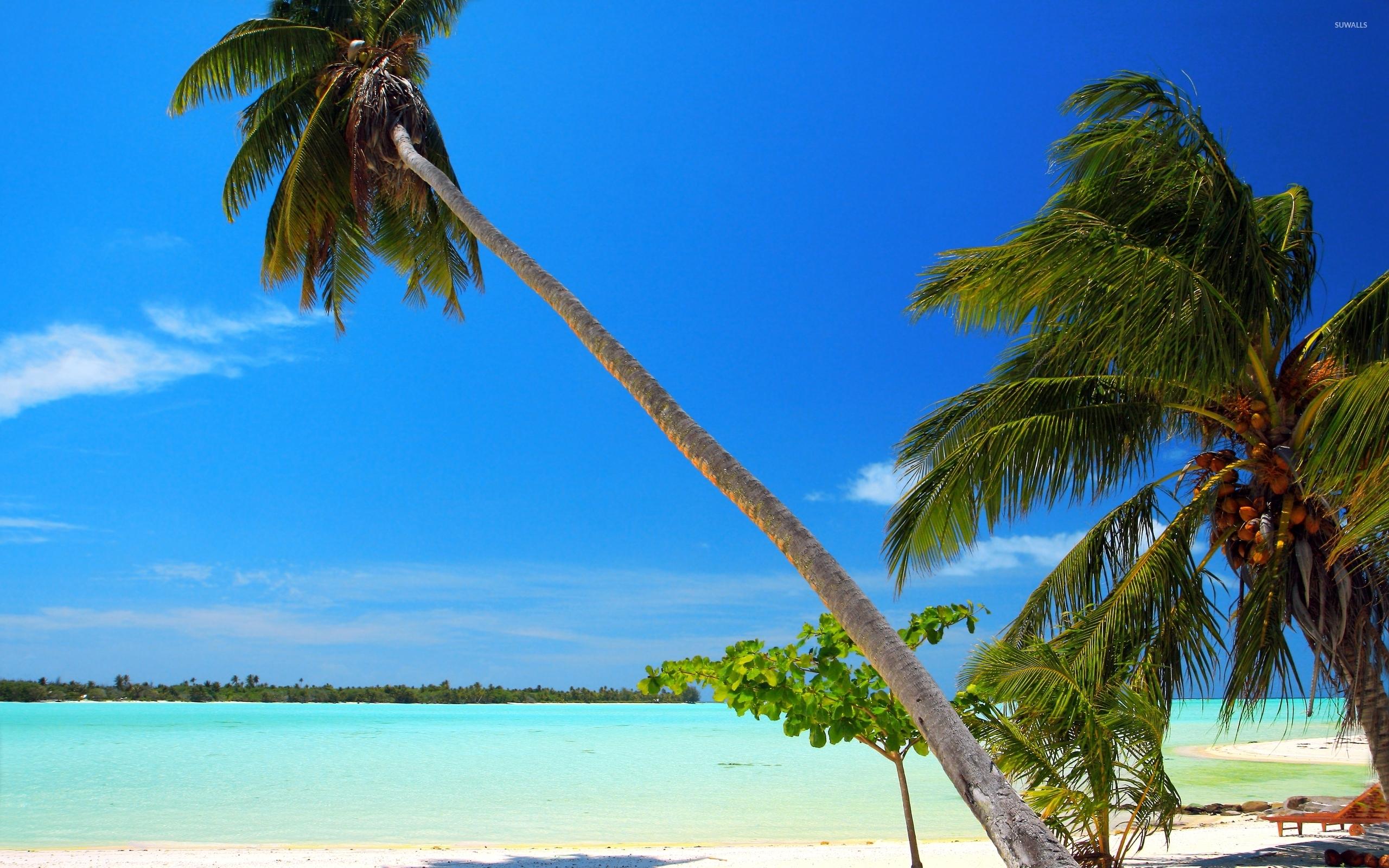 Palm trees on sandy beach wallpaper - Beach wallpapers ...