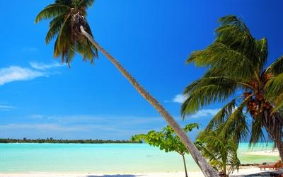 Palm trees on sandy beach wallpaper