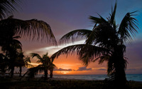 Palm trees on sunset beach wallpaper 2560x1600 jpg