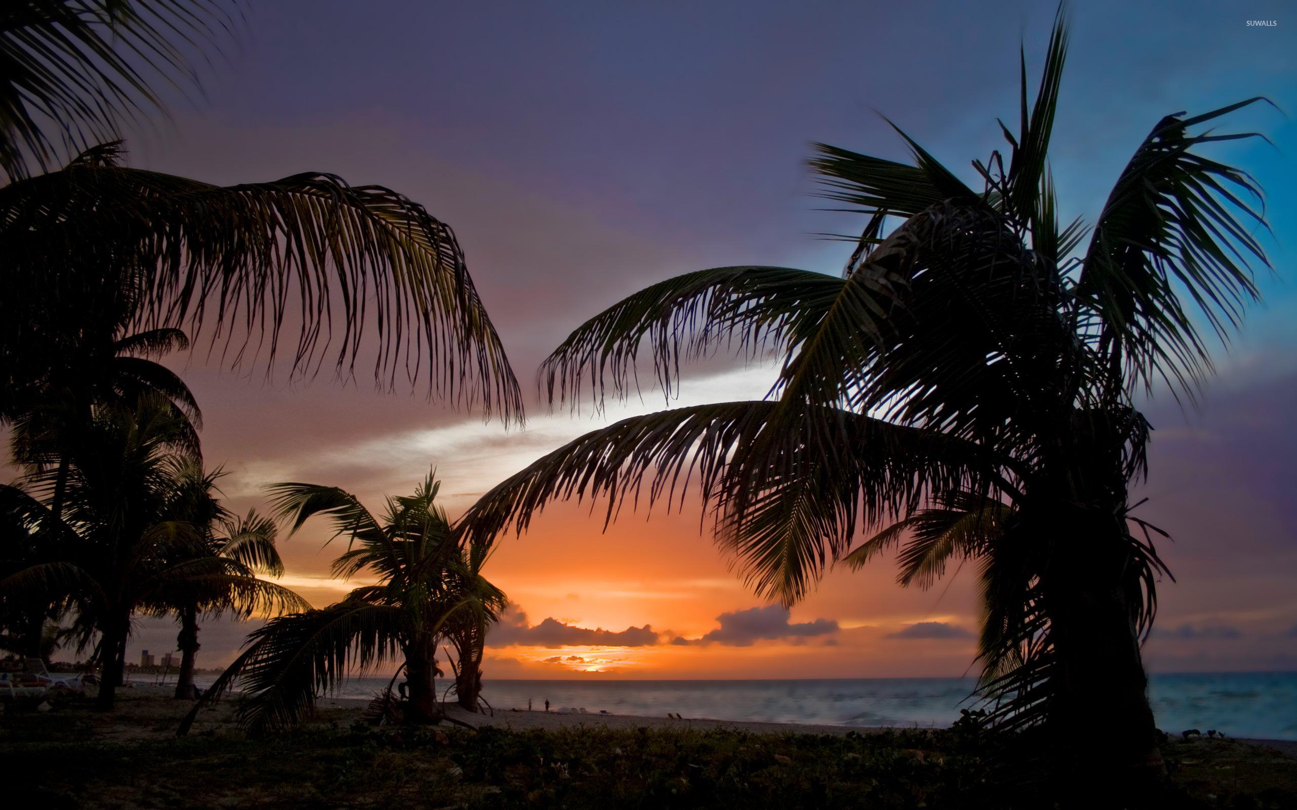 Palm Trees On Sunset Beach Wallpaper
