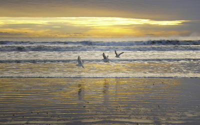Seagulls flying above the waves at sunset wallpaper