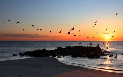 Seagulls flying at sunset above a sandy beach wallpaper